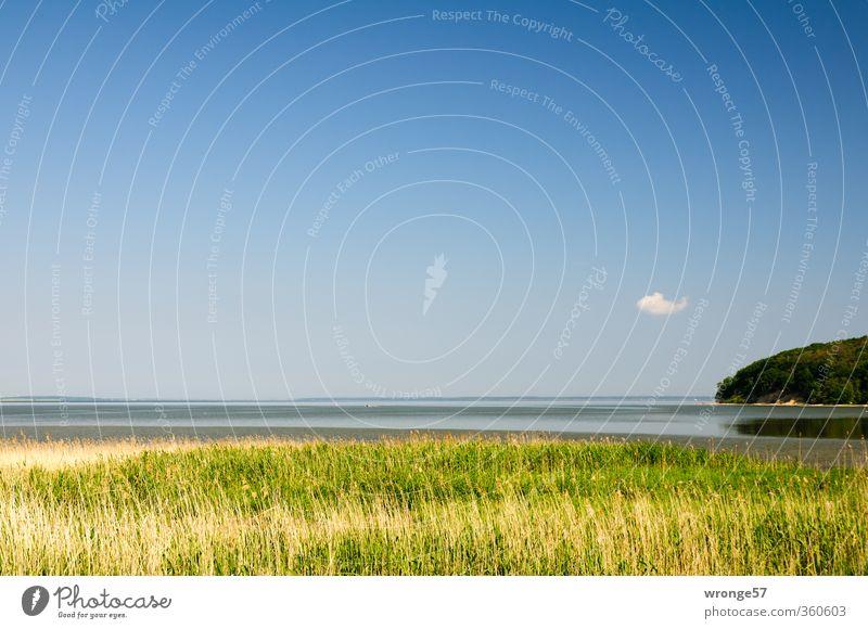 Boddenwölkchen Himmel Natur Wasser Sommer Pflanze Landschaft Wolken Gras Küste Horizont Insel Schönes Wetter Sehnsucht Ostsee Schilfrohr Fernweh