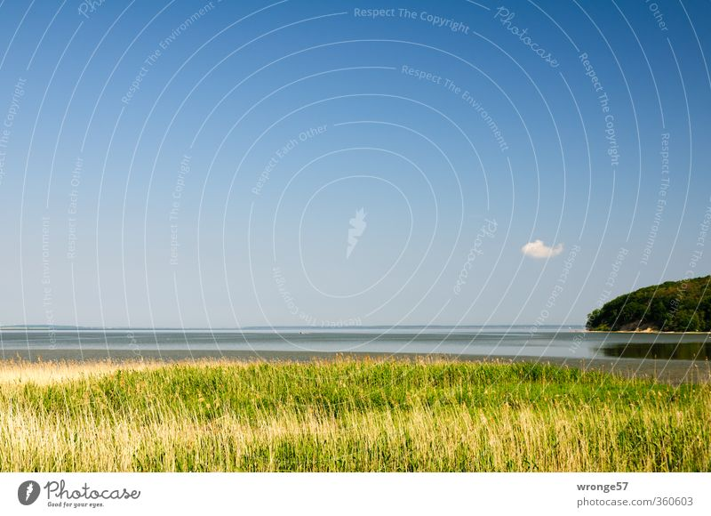 Boddenwölkchen Natur Landschaft Pflanze Wasser Himmel Wolken Horizont Sommer Schönes Wetter Gras Schilfrohr Riedgras Küste Ostsee Insel Rügen