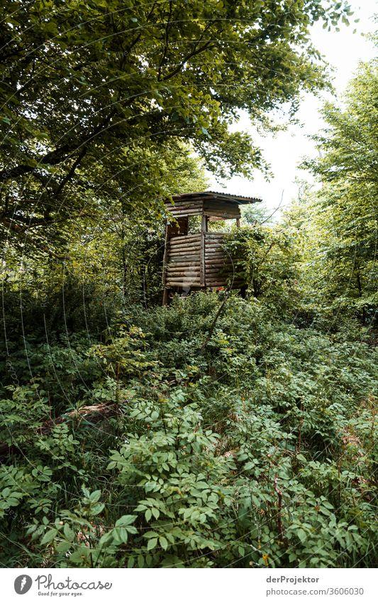 Hochsitz auf einer Lichtung im Harz Sachsen-Anhalt Abenteuer Tourismus Ausflug Freiheit Klimawandel Sightseeing Gebirge Berge u. Gebirge wandern Umwelt Natur