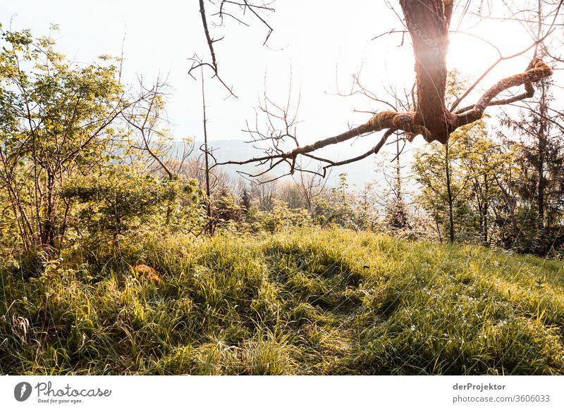 Morgens auf einer Lichtung im Harz Sachsen-Anhalt Abenteuer Tourismus Ausflug Freiheit Klimawandel Sightseeing Gebirge Berge u. Gebirge wandern Umwelt Natur