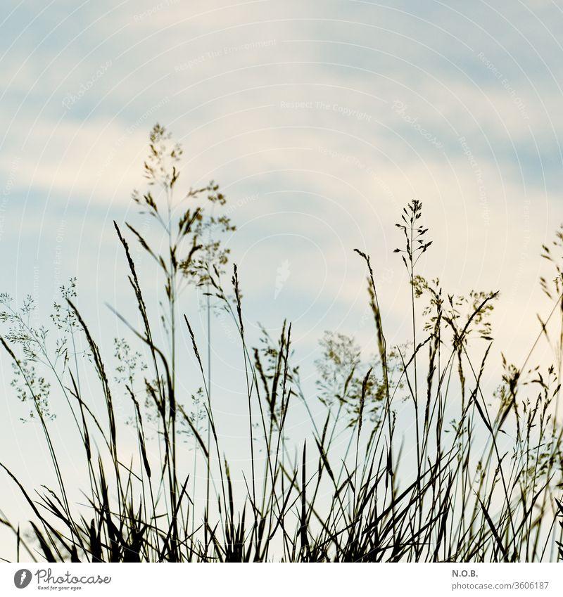Gräser vor Himmel auf Retro Gras Natur Menschenleer Außenaufnahme Pflanze Farbfoto grün Wiese Tag Schwache Tiefenschärfe Nahaufnahme Umwelt mehrfarbig