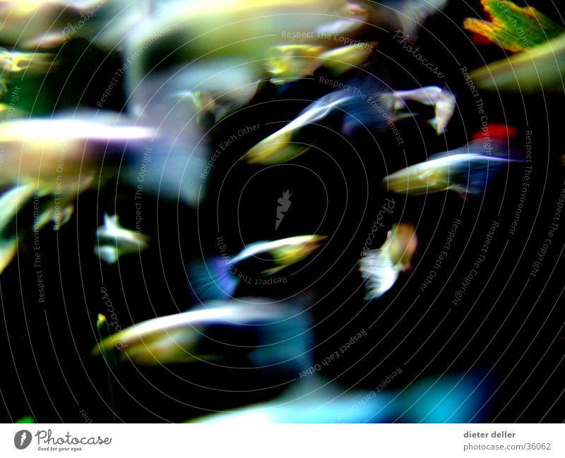 Wish Fishes Wasser Farbe Hintergrundbild Geschwindigkeit Fisch Aquarium Schwimmhilfe