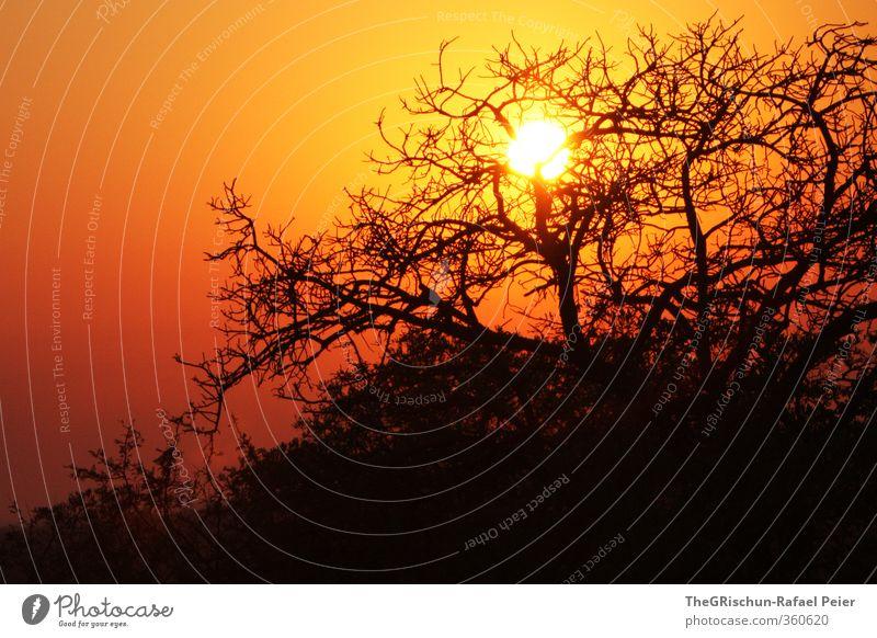 After the Sunset Natur Ferien & Urlaub & Reisen Sommer Sonne Baum Landschaft schwarz Ferne gelb Glück hell Stimmung orange gold Schönes Wetter heiß
