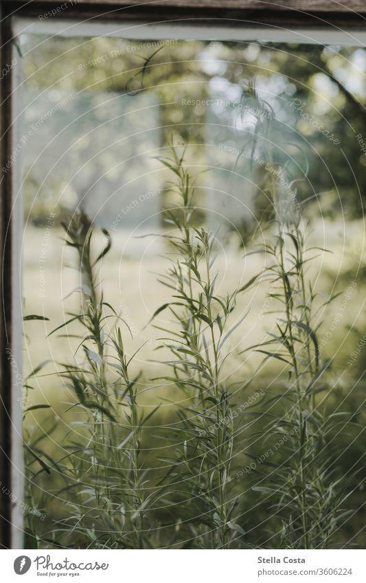 Blick aus dem Gewächshaus Garten Gewächsthaus Kräuter Nahaufnahme anbau blick auf den garten blick aus dem Fenster detailaufnahme kräutergarten landwirtschaft