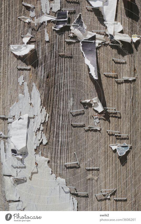 Lauter Tacker Wand Holz alt Maserung Menschenleer Außenaufnahme Strukturen & Formen Holzbrett braun Muster Nahaufnahme Detailaufnahme Metall Schatten