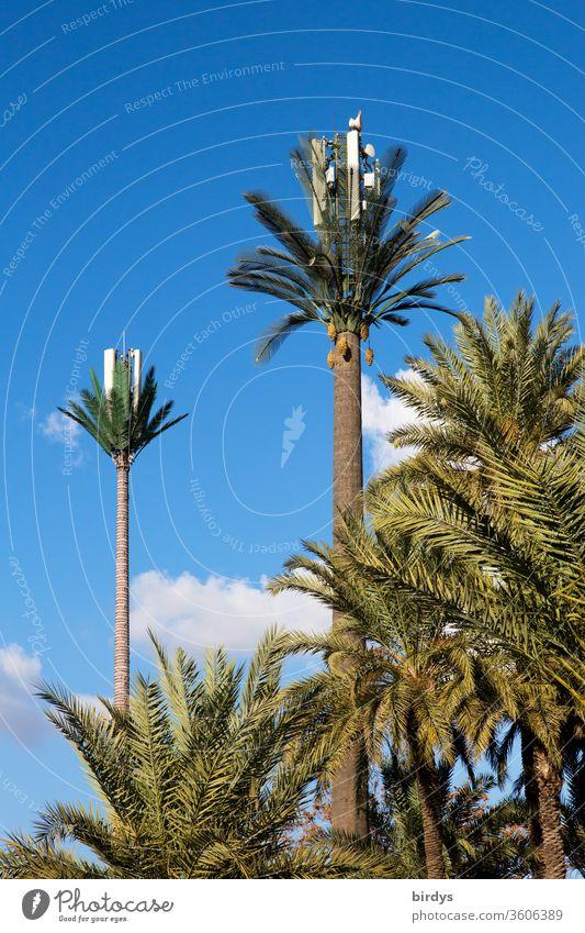 Mobilfunkmasten mit Mobilfunkantennen als Palmen getarnt. 4G, 5G, LTE 5g Kreativität Tarnung mobiles Internet Mobilfunkpalmen Antenne Netzabdeckung