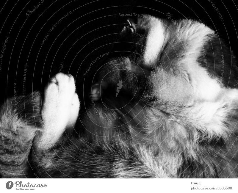 Preisfrage: Wer findet in dem Fellgewusel den Kater? Katze schlafen liegen Zufriedenheit kuschlig