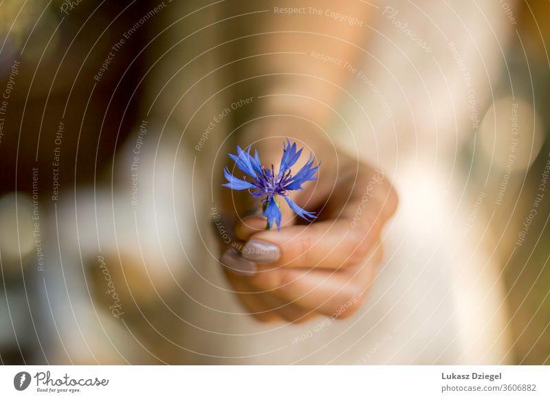 Frauenhand mit einer kleinen blauen Blume Frische Reinheit Weichheit Wellness menschliche Hände Eleganz ruhig Umwelt Lifestyle träumen Sinnlichkeit Blütenblatt