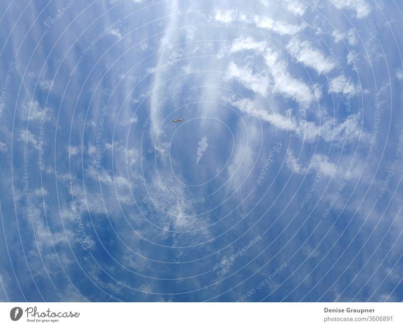 Eine Möwe am blauen Himmel über der Ostsee Tier Vogel Tag Fauna Flug Fliege Freiheit Seevogel wild Tierwelt Flügel Umwelt Sommer Air Europa Europäer kolobrzeg