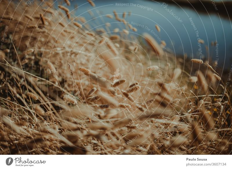 Schöne Nahaufnahme von Pflanzen Farbfoto Wildpflanze Außenaufnahme Wiese Sommer Blume natürlich Gras Menschenleer Umwelt Natur Tag Schwache Tiefenschärfe Park