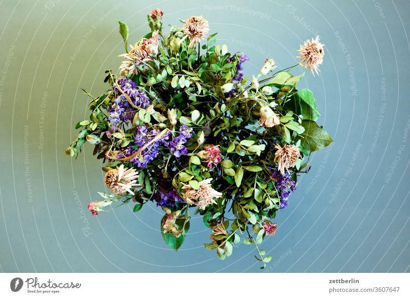 Verwelkte Blumen alt blume blumenstrauss blüte farblos geburtstag staubig trocken verblüht vergangen vergangenheit verstaubt vertrocknet verwelkt