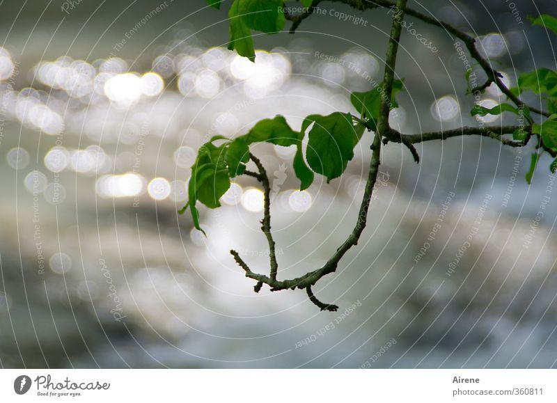 AST6 Inntal | Plätscherbach mit Blätterdach Umwelt Natur Pflanze Urelemente Wasser Sommer Baum Blatt Grünpflanze Zweige u. Äste Ast Flussufer Bach glänzend