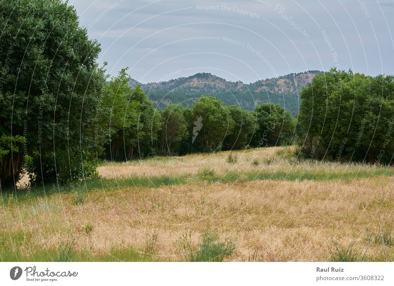 Grüne Felder im heißen und hellen Sommer Ernte Landschaft ländlich Wiese Umwelt Gelände Wolkenlandschaft Sonnenlicht Weide im Freien natürlich Ebene Natur