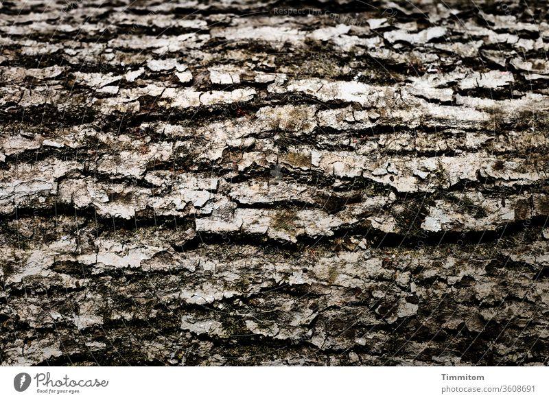 Rinde waagrecht Baum Holz Natur Wald Außenaufnahme braun Umwelt natürlich grau Konsistenz Nutzholz