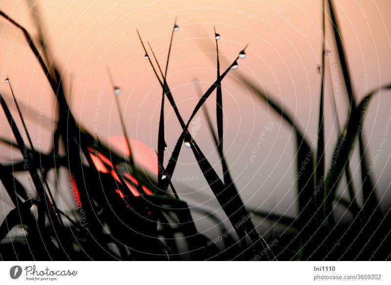 Sonnenaufgang im Morgennebel mit Gräsern und Tautropfen Sonnenaufgang - Morgendämmerung Oktober dunstig Nebelstimmung schemenhaft rosa Feuerball Stimmungsbild