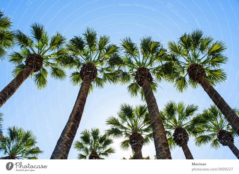 Palmen Handfläche Bäume Baum Hintergrund alt Sommer Himmel reisen blau Natur Urlaub Stil Landschaft südländisch im Freien malerisch Sonnenlicht tropisch