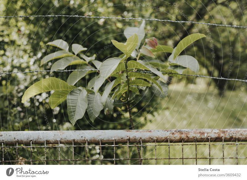 Gartenzaun Maschendrahtzaun Naturaufnahme draußen gartenzaun grün natur naturschutz niemand Zaun Außenaufnahme Menschenleer Sträucher Pflanze Farbfoto Grenze