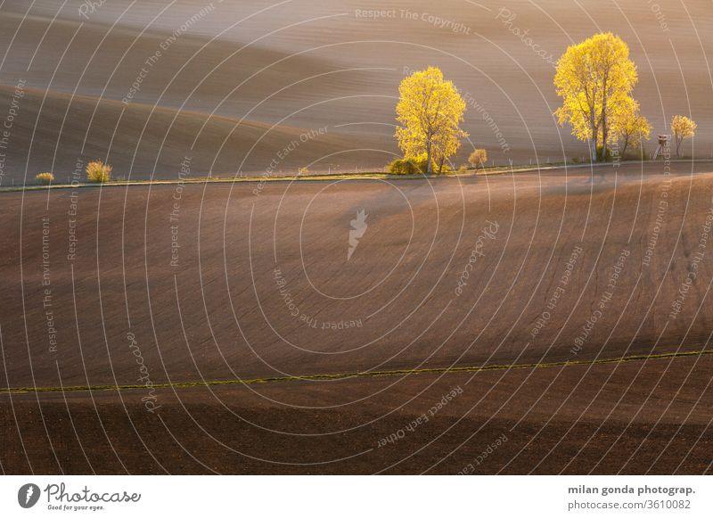 Ländliche Landschaft der Region Turiec in der Nordslowakei. Slowakische Republik ländlich Bereiche Frühling Ackerbau Hügellandschaft Morgen Baum