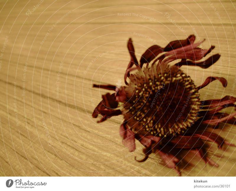 vertrocknete liebe Blume rot Holz hell Schreibtisch obskur