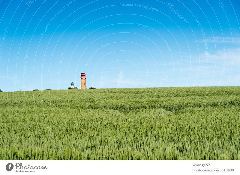 Die zwei Leuchtturm am Kap Arkona winzig klein hinter einem grünen Getreidefelder am Horizont Leuchttürme Schinkelleuchtturm neuer Leuchtturm Seezeichen Rügen