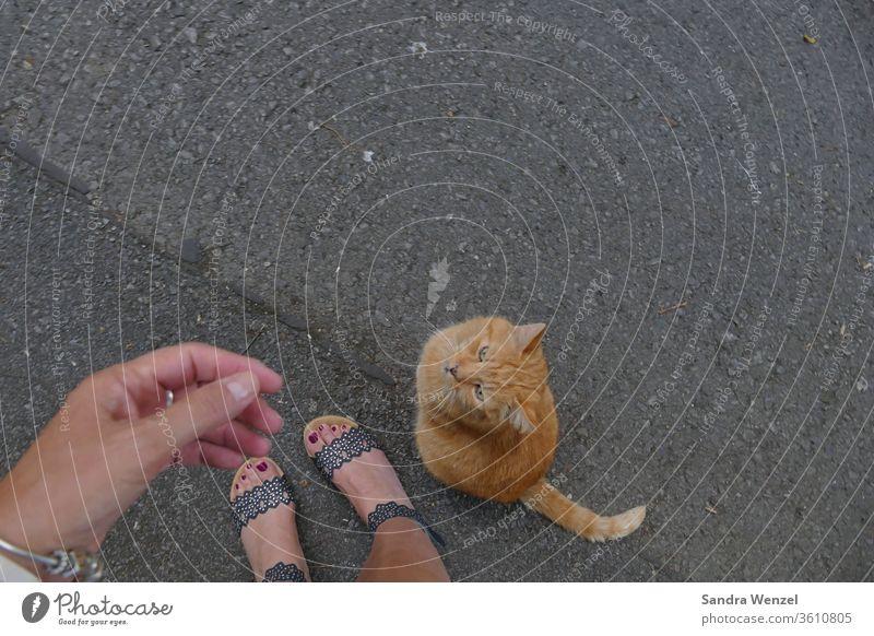 """Nachbarskater """"Benny"""" Katze Kater Vertrauen LIebe TIerliebe Katzenhaltung Fütterung Verständnis Unterhaltung Zuneigung Tierbesitzer"""