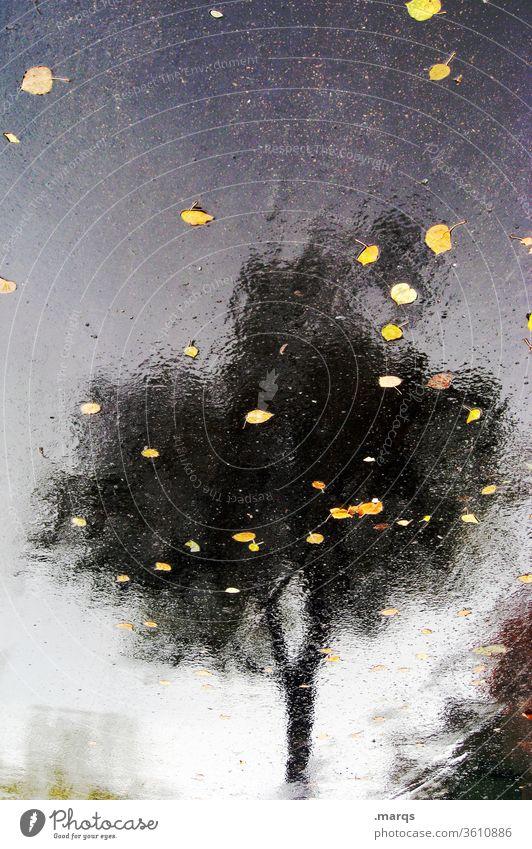 Herbst im Sommer Reflexion & Spiegelung Asphalt Baum Blatt nass schemenhaft