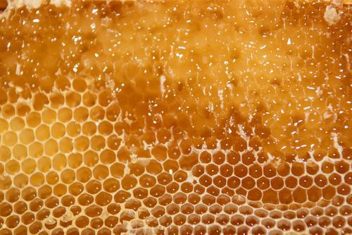 geöffnete Honigwabe mit Rapsanteilen vor dem Schleudern Imkerei imkern Honigproduktion ökologischer landbau Honigbiene Lebensmittel Gesundheit Sommer Bienenkorb
