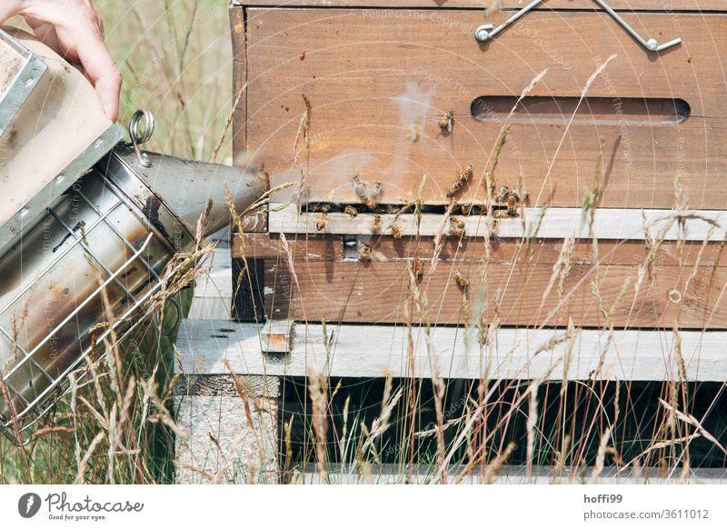 Imker beruhigt die Bienen am Flugloch mit Rauch  aus einem Smoker Imkerei imkern Honig Honigproduktion ökologischer landbau Honigbiene Lebensmittel Gesundheit