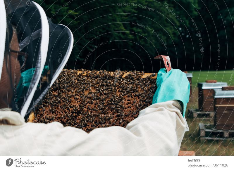 Sichtung der Waben Imkerei imkern Honig Honigproduktion ökologischer landbau Honigbiene Lebensmittel Gesundheit Sommer Bienenkorb Bienenstock Natur