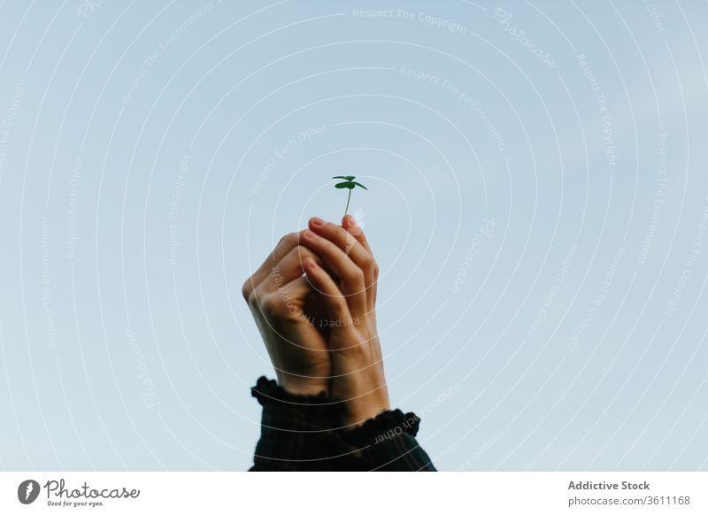Nutzpflanzenfrau mit Kleeblatt Blatt Frau Pflanze Natur grün sanft filigran sehr wenige Sommer Blauer Himmel wolkenlos Flora Umwelt idyllisch tagsüber ruhig