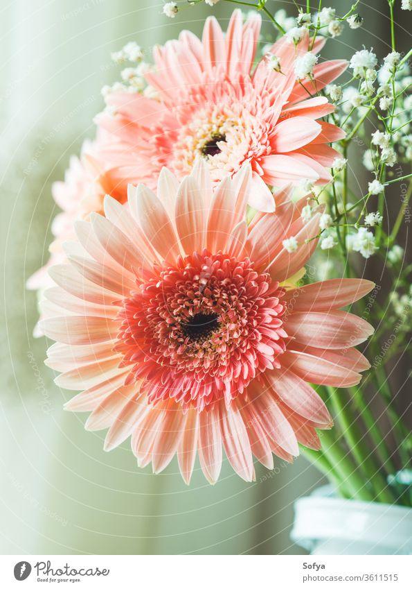 Blumenstrauss aus rosa Gerbera-Gänseblümchen Muttertag Blumenstrauß Hochzeit Frauentag Hintergrund Tag der Blumen Design Pastell geblümt altehrwürdig Sommer