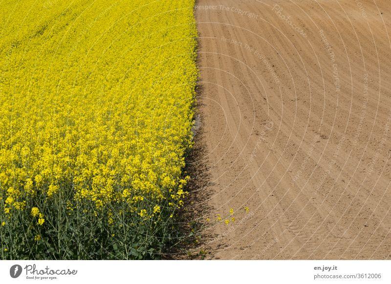 halb Rapsfeld und halb Acker Rapsblüte Rapsanbau rapsfeld. oeko Ackerbau Feld Felder Ackerboden Ackerpflanzen Ackerwirtschaft ackerfurche gelb Landwirtschaft