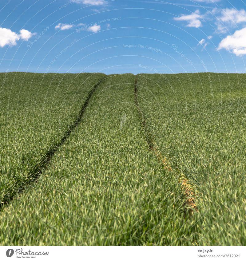 Traktorspur in einem Kornfeld bis zum Horizont Weizenfeld Getreide Getreidefeld Ackerbau Agrar Landwirtschaft Anbau Hügel Öko grün Himmel Wachstum Klima