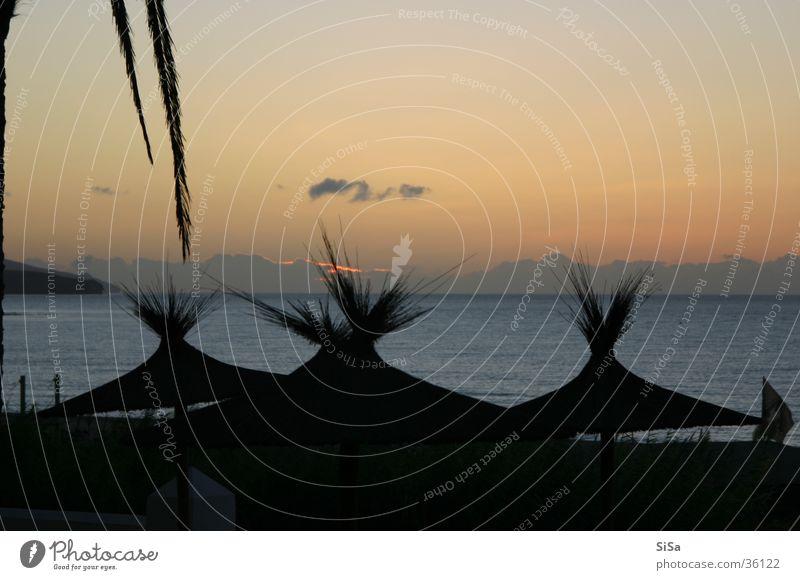 Palm Beach Meer Strand Sonnenschirm