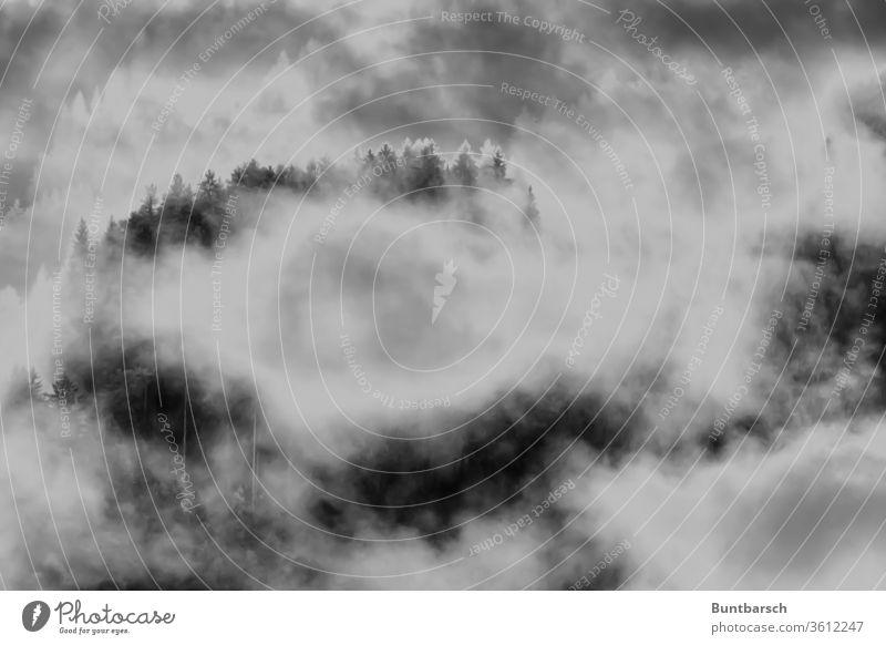Gebirgswaldstimmung im Nebel Wald Herbst Licht Baum Außenaufnahme Landschaft Schatten Silhouette Kontrast Menschenleer Natur Einsamkeit Gebirge Alpen