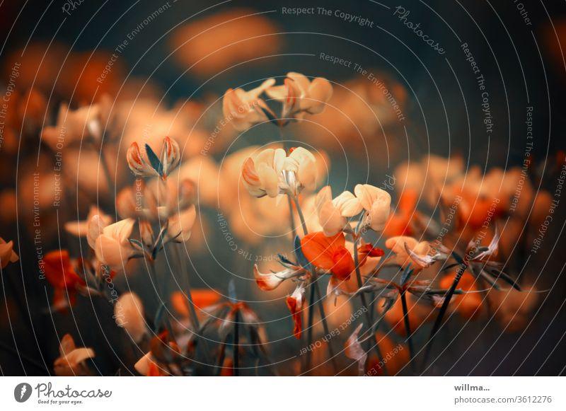 künstlerisch freie Darstellung von Hornklee Blumen zart Lotus corniculatus Schotenklee Schmetterlingsblütler surreal künstlerische Darstellung besonders
