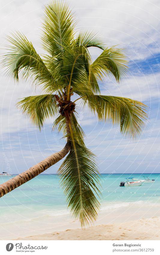 Tropischer Strand dominikanisch Himmel reisen blau tropisch Paradies Wasser Meer MEER Küste Sand Urlaub Karibik winken Sommer Insel Natur Handfläche Landschaft