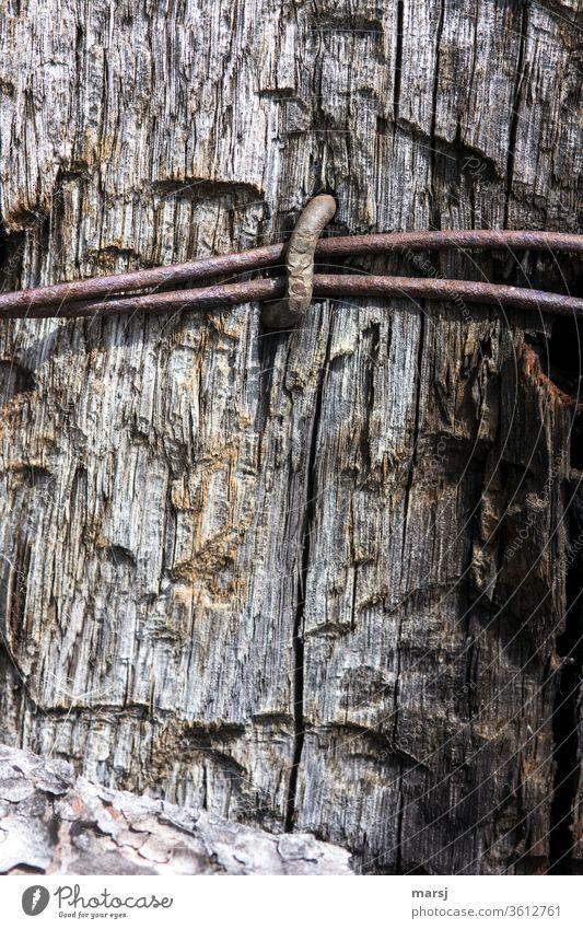 alt | gemeinsam festgenagelt und verwittert Draht Rost parallel Holz Strukturen & Formen Farbfoto Verfall Metall Gedeckte Farben Vergänglichkeit abstrakt