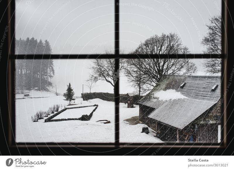 Blick auf den Schneebedeckten Hof Dezember Urlaub im Winter Schwarzwald Gedeckte Farben ruhig grau Tag Wetter Schwache Tiefenschärfe Umwelt Landschaft