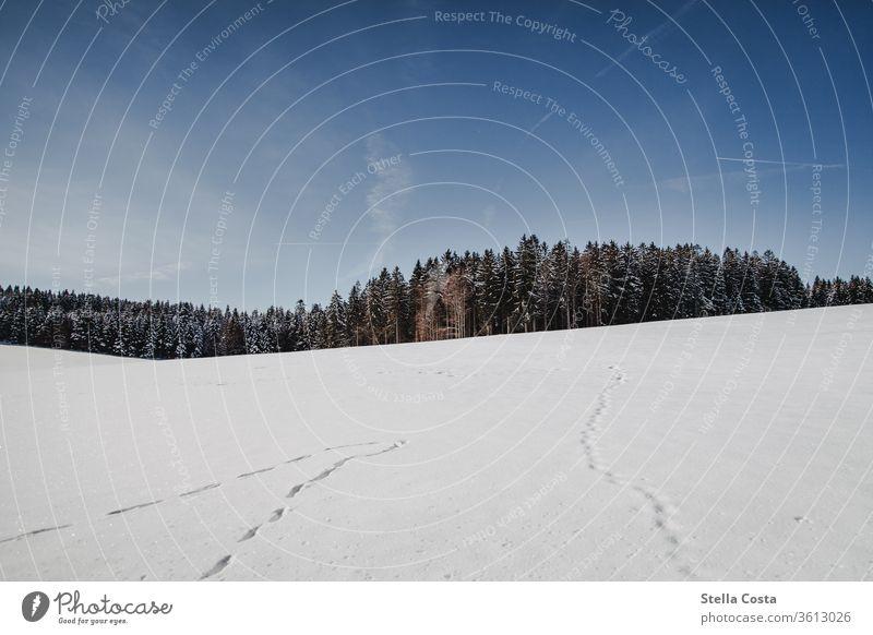 Winterlandschaft - Schnee Panorama Dezember Urlaub im Winter Schwarzwald Gedeckte Farben ruhig grau Tag frieren Schwache Tiefenschärfe Wetter Schneedecke weiß
