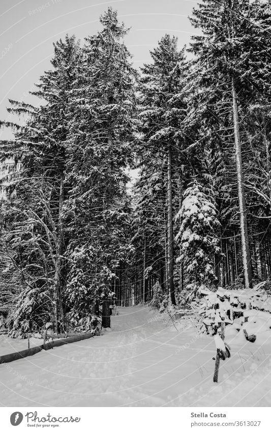 Schneelandschaft Winter Winterurlaub Winterstimmung Winterwald Außenaufnahme Farbfoto Natur Wald Menschenleer Frost kalt Baum Schneesturm Wintertag Klima