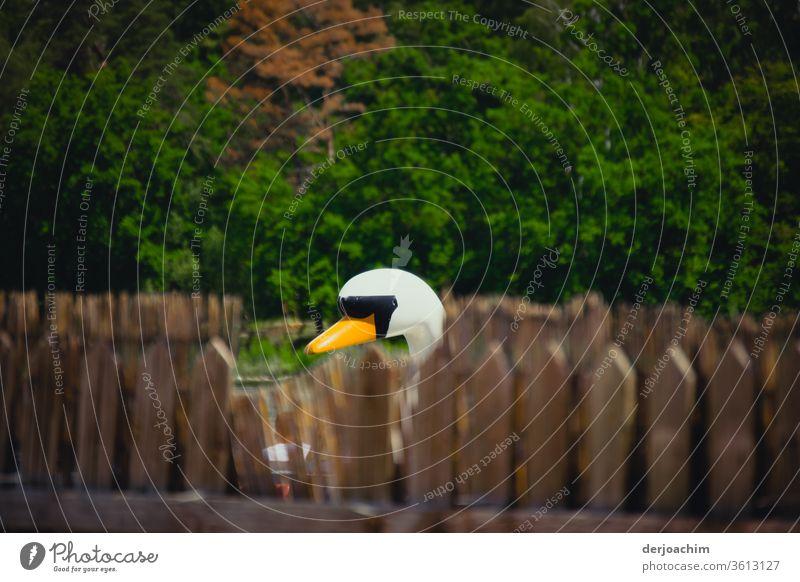 Ein Holzschwan schaut hinter Zaunpfählen ob der Fotograf schon weg ist.Im Hintergrund stehen Bäume. Schwan Schnabel Tier weiß schön Vogel Farbfoto Außenaufnahme