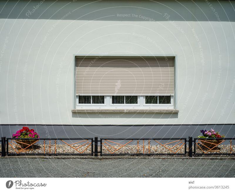 Hauswand mit zwei Blumentöpfen Blumentopf Zaun Fenster Rolladen piefig Garten Fassade Menschenleer Wand Gebäude Außenaufnahme Mauer Farbfoto Architektur trist
