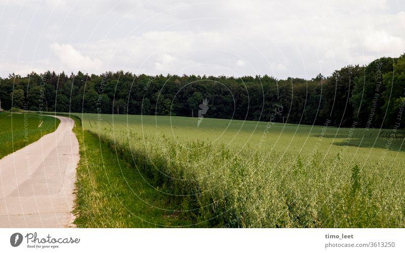 Eine grüne Landschaft innerhalb des Ruhrgebiets. Feld Wald Straße Stillleben Baum Natur Sommer Wiese Himmel Umwelt Hügel Ruhe Gras Schatten Licht Sonne