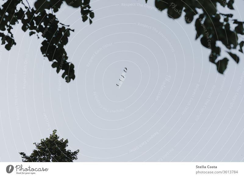 Vogelschwarm - Zugvögel Vögel Zugvogel Froschperspektive Himmel fliegen Schwarm Außenaufnahme Farbfoto Tier Natur Tag Wildtier Zusammensein Menschenleer