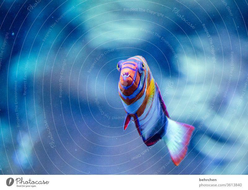 eine kieferorthopädische behandlung wäre ratsam gewesen flossen See Meer Wildtier Natur Menschenleer Tierporträt Unterwasseraufnahme Farbfoto Aquarium Wasser