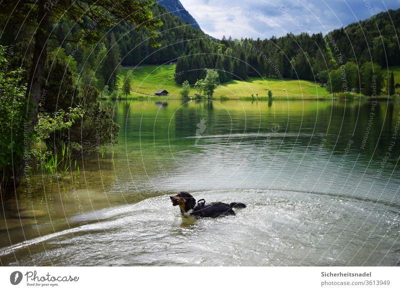 Hund im See Bergsee Bayern Alpen Wasser Landschaft Farbfoto Ferien & Urlaub & Reisen Natur Berge u. Gebirge Außenaufnahme Sommer Menschenleer Tag Erholung