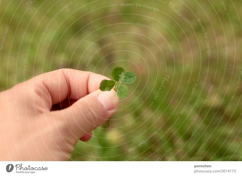 Das Glück erzwingen wollen. Seines eigenen Glückes Schmied sein! Hand hält ein vierblättriges Kleeblatt. Ein Blatt wird dazu gehalten. glück