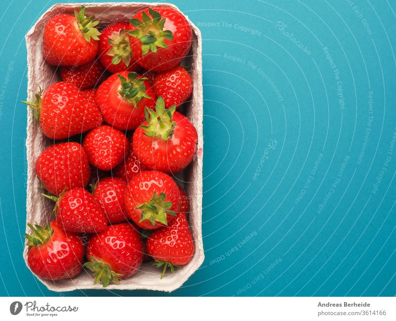Frische Bio-Erdbeeren, Blick von oben Natur Feinschmecker Gesundheit Makro essen Ernährung lecker pulsierend Lebensmittel frisch rot Dessert süß Frucht