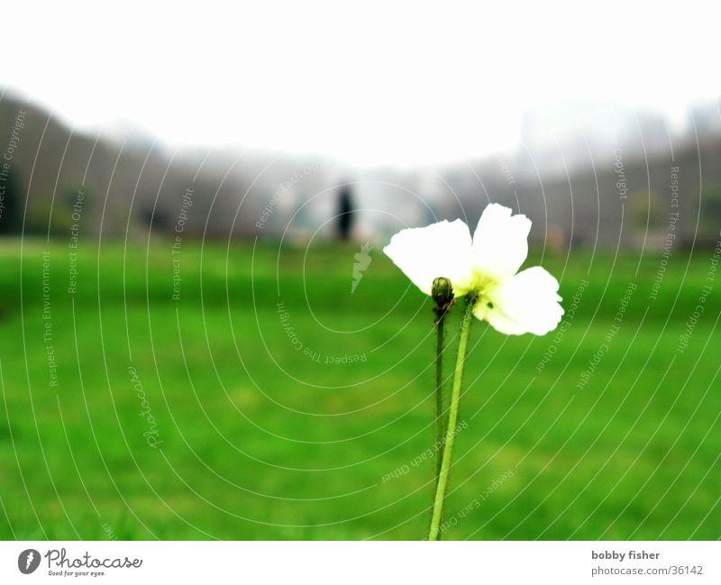 solitaire Blume grün Pflanze Einsamkeit Park hell Paris